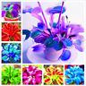100 PCS Seeds Bonsai Insectivorous Plants Dionaea Muscipula Giant Venus Flytrap