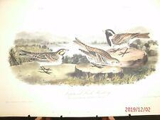 AUDUBON'S BIRDS of AMERICA - Plate 152 - Lapland Lark Bunting
