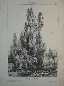 Jules COIGNET 1798-1860 Litho ORIGINALE PAYSAGISTE ARBRE PEUPLIER BOTANIQUE 1831