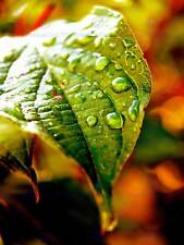 NATURE PHOTO LEAF WATER DROP GREEN POSTER ART PRINT HOME PICTURE BB173B