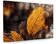 AUTUMN WOODLAND TREE ORANGE LEAVES CANVAS PICTURE PRINT CHUNKY FRAME #4143