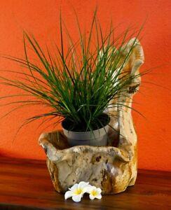 Wurzelholz Schale Übertopf Teak Holz Schale Orchideen Topf Dekoration Blumentopf