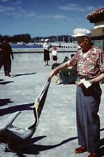 FEEDING A PELICAN ON MILLION DOLLAR PIER ST PETERSBURG FL FEB 1955 35mm SLIDE