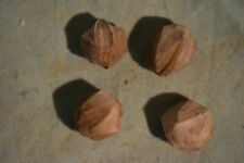 Blastoids Pentremites godoni mississipien Alabama US  no ammonite