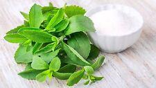 Stevia Rebaudiana  100x   Pianta zero calorie