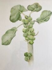 """Stunning Botanical Watercolour Print """"Sprouts"""" Artist Signed Giclée Mounted"""