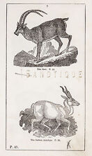 """""""HISTORY OF THE EARTH"""" by Goldsmith - 1810 - THE IBIX & THE INDIAN ANTELOPE"""