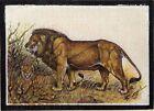 Handmade Indian Miniature Painting of Lion Wildlife Ethnic artwork on Silk