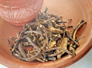Osha Root Native American Smudging Herb  24g