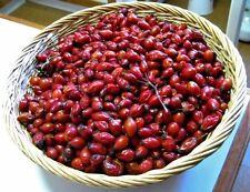 Albanian Rosa Canina Tea 500g Canina-Wild Rose A Lot of Vitamin C,Top QualityTea