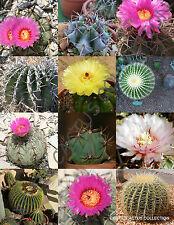 ECHINOCACTUS MIX variety exotic barrel cactus rare flowering cacti seed 15 SEEDS