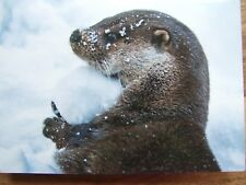 Cute!! Otter With Snowball Quality Christmas Cards Pack of 10 ~100% for Charity~