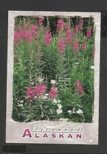 Colour Postcard Alaskan Wildflowers Yarrow and Fireweed unposted