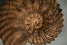 ammonite Hoplites benettianus var. benettianus albien de Courcelles Aube France