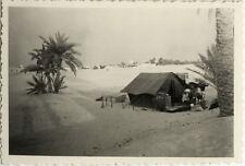 PHOTO ANCIENNE - VINTAGE SNAPSHOT - OUARGLA SAHARA ALGÉRIE CAMPEMENT TENTE 1951