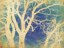NATURE TREE NEGATIVE BRANCH BLUE GREEN POSTER ART PRINT PICTURE BB218A