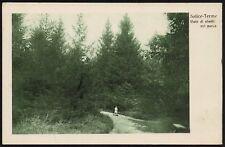 AX0319 Salice Terme (PV) - Viale di abeti nel parco - Cartolina postale
