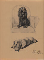 c. aldin original 1935 print of a spaniel and sealyham