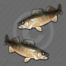 Walleye Fishing Decal Fish Sticker Erie Charter Boat Michigan Canada