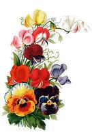 """Waterslide Decals (4pcs 2.5""""x3.5""""each) Pansies FLONZ 0684 Vintage Flowers"""
