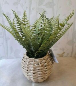 Pteridophyte Fern Houseplant Artificial Plant .In A Woven Wicker Pot