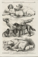 ANTIQUE PRINT DATED 1865 DOG SHOW PRIZE DOGS ENGLISH SETTER POINTER  MASTIFF ETC
