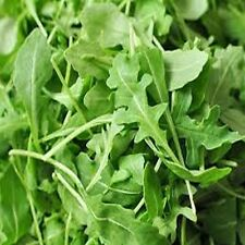 10 Arugula Rocket Seeds