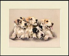 SEALYHAM TERRIER GROUP OF DOGS LOVELY DOG PRINT MOUNTED READY TO FRAME