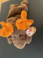 Ty Beanie Baby Chocolate the Moose Near Mint Condition Tag Error Rare !