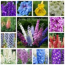 30 Delphinium Flower Seeds Larkspur 22 Kinds Ornamental Beautiful Bright Plants