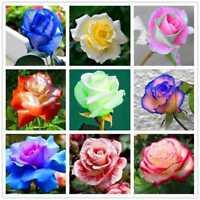 200 Pcs Rare Rainbow Rose Graines De Fleurs Plantes Multicolores Maison Jardin