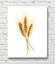 Wheat Watercolor Painting Wheat Art Print by Artist DJR