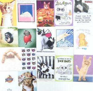 Lot of 16 FUNNY CAT LOVERS CARDS 12 Birthday 3 TOY 1 GW + Stickers AVANTI RPG +