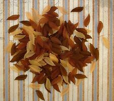 LOOSE ACRYLIC-LUCITE BEADS-LONG LEAF-LEAVES-MIXED BROWNS-45 BEADS-PLUS FREE GIFT