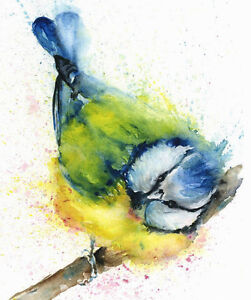 Limited Print of  BLUETIT original watercolour by HELEN APRIL ROSE   290