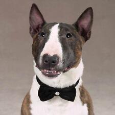 "Dog or Cat Bow Tie - Rhinestone Velvet Bowtie by Aria 9 - 16.5 "" Neck Black"