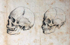 Framed Vintage Medical Print – 2 Human Skulls (Picture Poster Art Brain Anatomy)