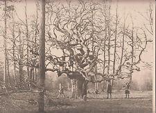 PHOTO scouts ou louveteaux en forêt. Format 30 x 23,5 centimètres