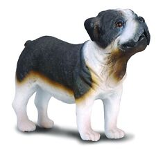 New CollectA English Bull Dog British Bulldog Figure 88179 -  FREE UK DELIVERY !