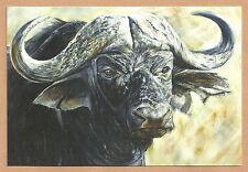 "Südafrika - Postkarte Büffel ""The Big Five"" 2014 Neu  11,5 x 17 cm"
