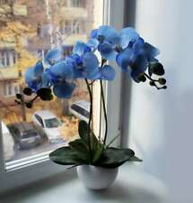 200Pcs Blue Orchid Fresh Seeds Butterfly Flowers Perennials Spring Home Garden