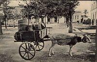 Portugal AZORES St. Michaels Sheep Car Schaaf Fuhrwerk Vintage Postcard ~1910