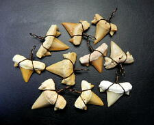 "1 "" Lamna Shark Tooth with Antique Wire Wrapped Fossil Teeth Morocco 10 pcs"