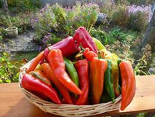 Bulgarische Paprika Spitzpaprika Saatgut 20+Stück Samen aus Eigenanbau