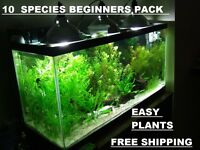 10 DIFERENT SPECIES 50+ stems FULL 30g planted tank easy aquascaping Free ship