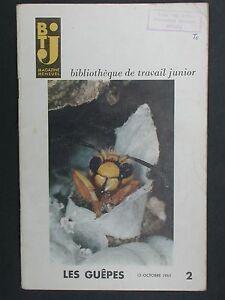 BT junior 2 Les guêpes Sciences naturelles Insectes sociaux Frelons Venin