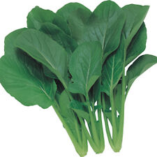 Kings Seeds - Oriental Japanese Greens Green Boy - 250 Seeds