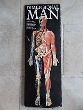 Vtg Dimensional Man David Pelham 1993 Life Size 3 dimensional Anatomy human body
