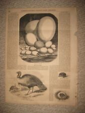 ANTIQUE 1854 WHAT AN EGG IS TURTLE WILD TURKEY BIRD PRINT NATURAL HISTORY FINE