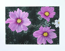Original Floral Cosmea Gouache Watercolour Pink green nature flower Painting